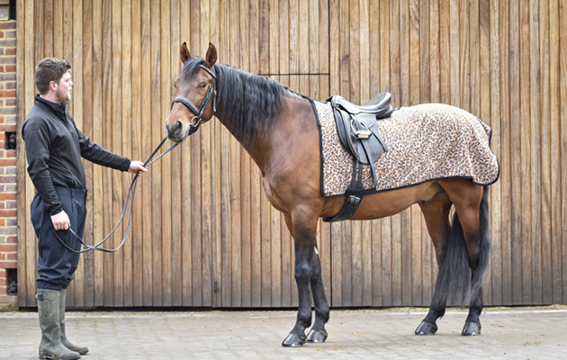 Snuggy Hoods Fleece Exercise Sheet Review Horse Hound