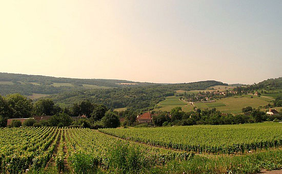 Ten Best White Burgundy - The Top 10 - Decanter