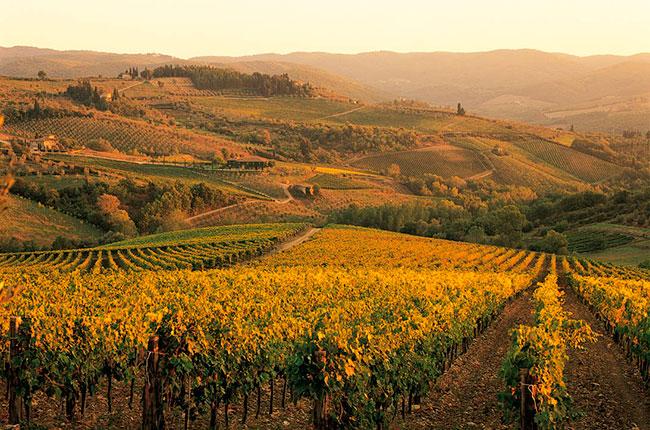 Fall Sunflowers Wallpaper Chianti Bids To Join Unesco World Heritage Club Decanter