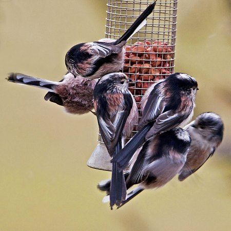 Garden Life Perfect Food Bar Small garden birds suffer in cold weather - Country Life