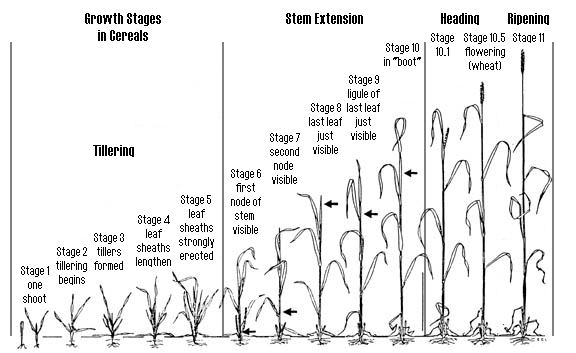 plant size nutrient requirement and growth rate conceptual diagram