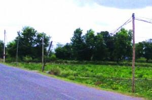 24-06-15 Faizabad - Bamboo electricity poles web