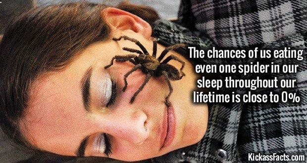 1065 Spider Sleep Mouth