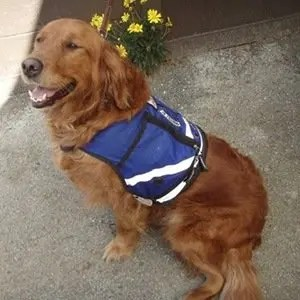 Service dogs-Interesting Facts About Dogs