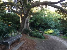 Wendy's Secret Garden : Uncovering Hidden Wonder in Sydney