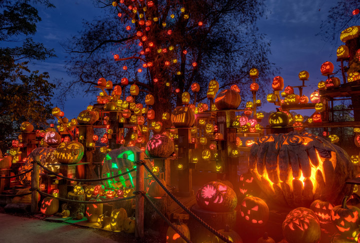 The Laughing Tree is the show stopping finale where giant trees are festooned with thousands of pumpkins and surrounded by lights, fog and music.