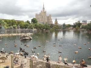 Duck Filled Pond at Moscow Zoo