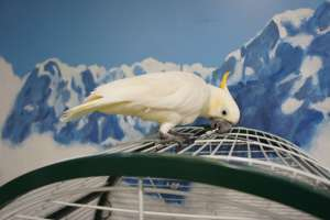 Cockatoo Moscow Museum of Illusions