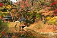 Secret Garden at Changdeokgung Palace | kidsfuninseoul