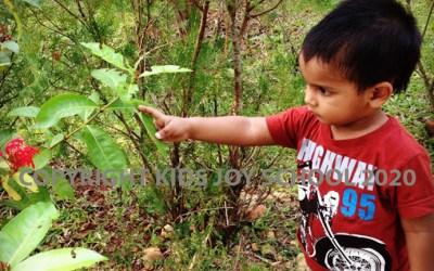Nature Activities for Preschoolers