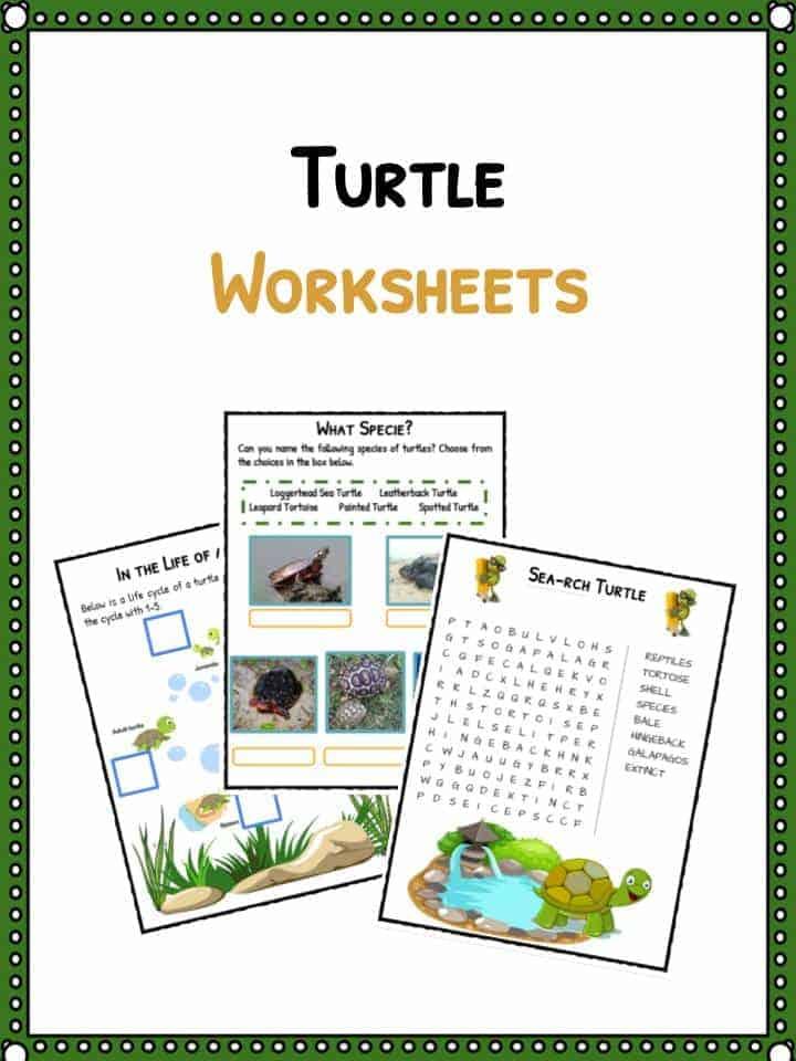 Turtle Facts , Worksheets  Habitat/Species Information For Kids