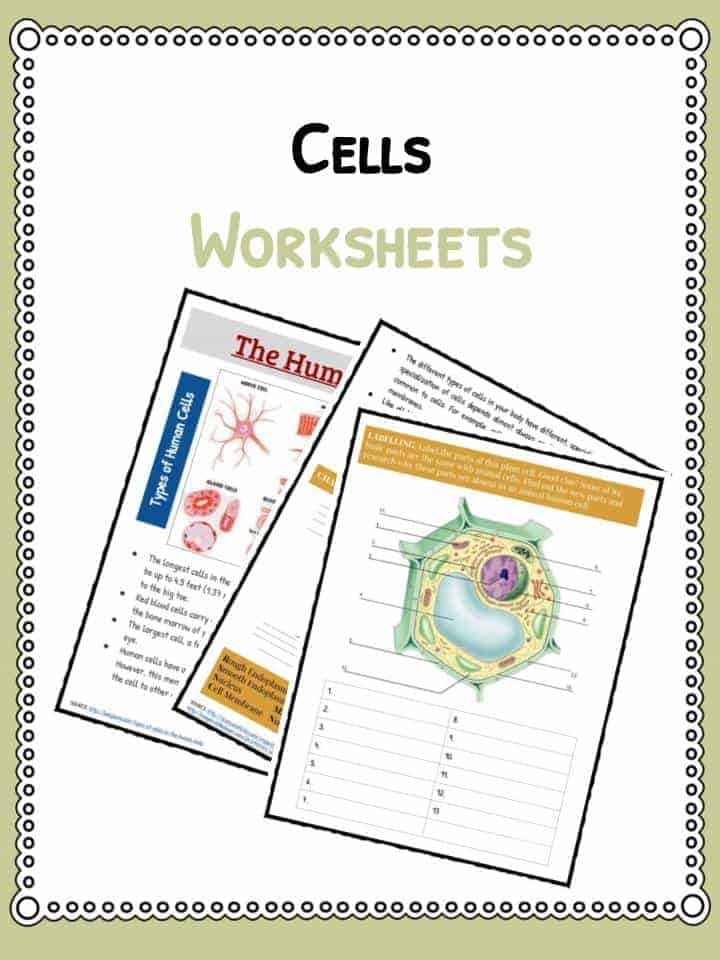 Cell Facts, Information  Worksheet Animals, Human  Plants