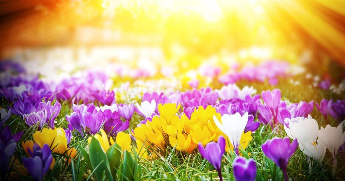 Spring Facts, Worksheets  Historical Information For Kids