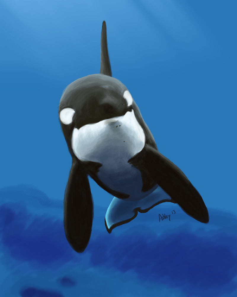 Kids Animal Wallpaper Orca Pictures Kids Search