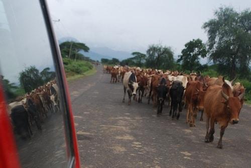 Driving through Ethiopia- Kid World Citizen