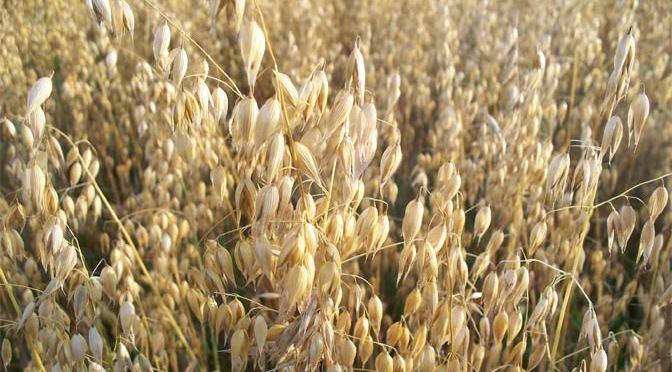 home-oats