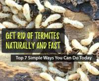 How to Get Rid of Termites: 7 Simple Ways to Kill Termites