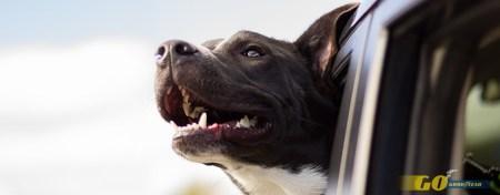 Hoteles para viajar con perro