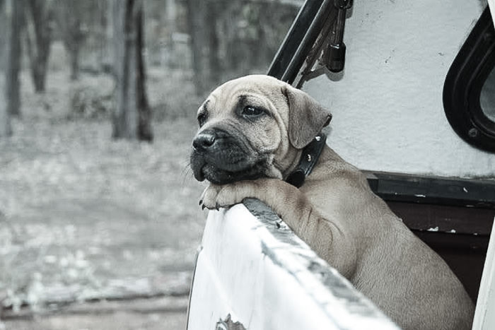 Travelling with dogs and pets