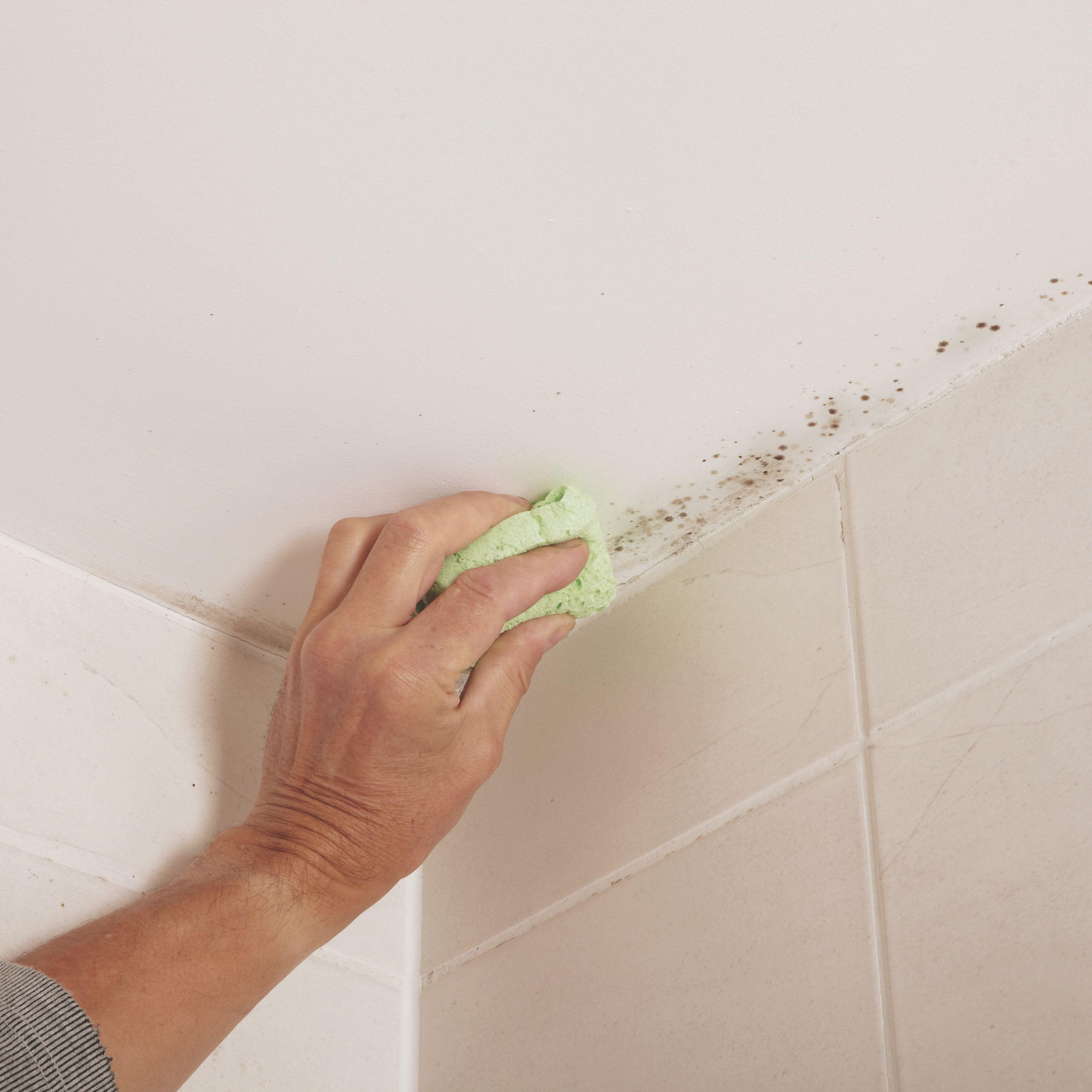Black Mold Under Wallpaper How To Identify Repair Amp Protect Against Damp At Home