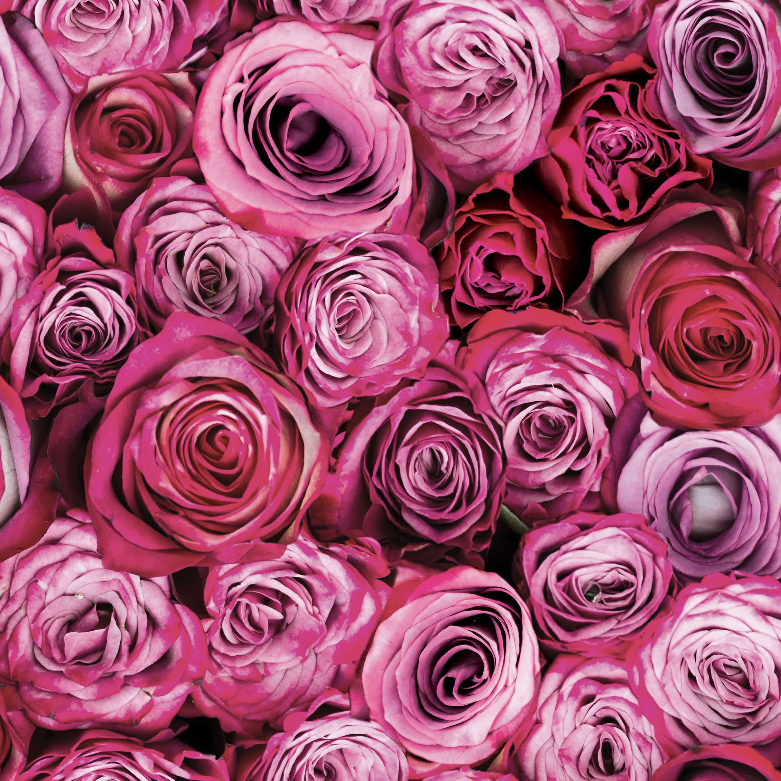 Roze Gipsplaat Fresco Pink Roses Wallpaper Departments Tradepoint