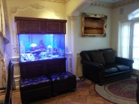 Portfolio - Kings Fish Tank