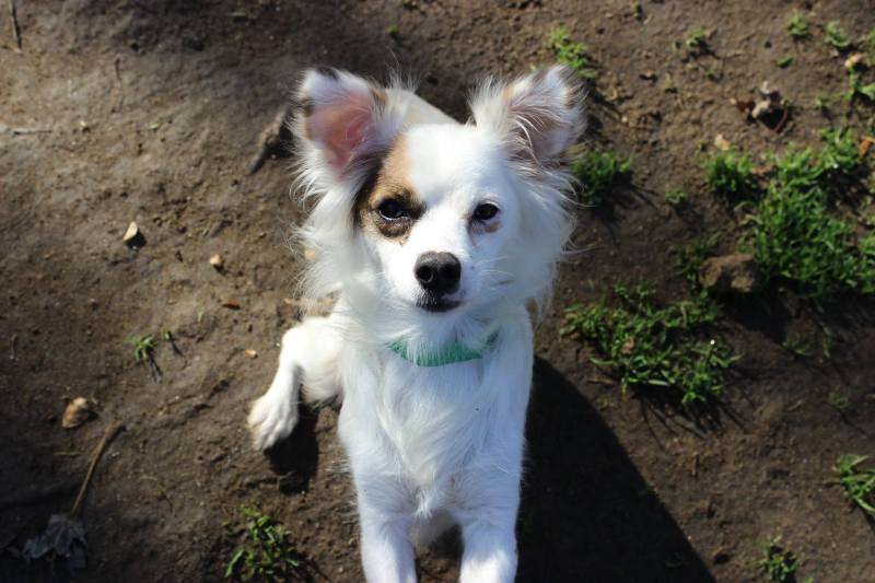 Lovable Stray Dogs Kings River Life Magazine Craigslist Fresno Pets