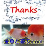 Thanks for 神畑養魚株式会社 ナイスだぜ!五色東錦