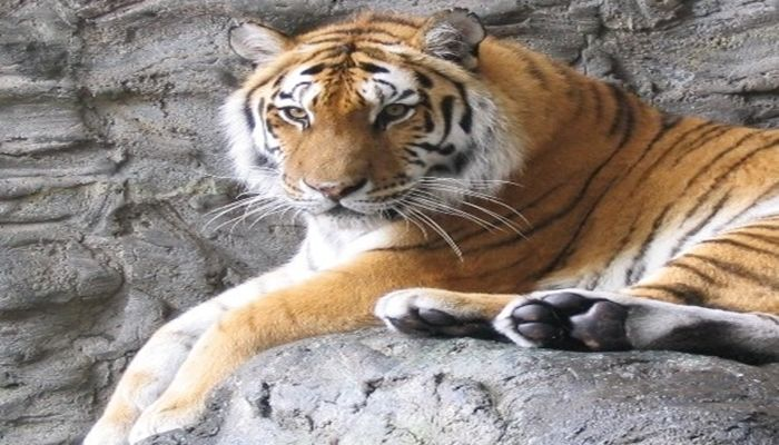 横浜みなとみらいデート 野毛山動物園