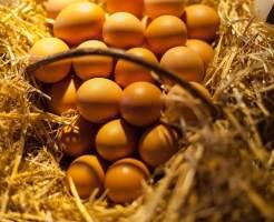 eggs-825032_640