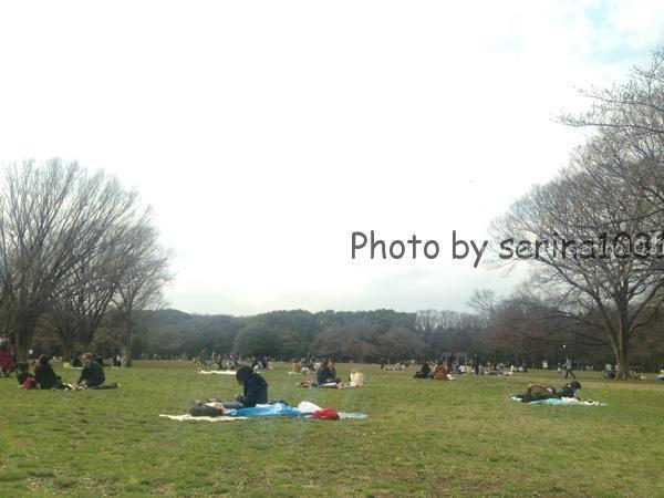 代々木公園お花見ピクニック