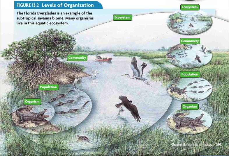 Levels Of Organization Kis Ecology