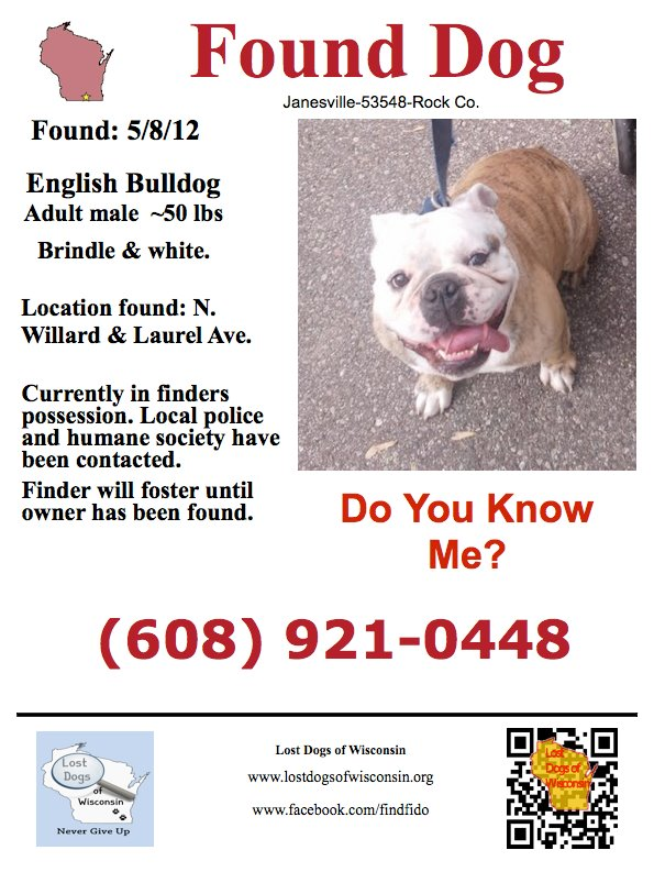 found dog flyer - Selol-ink - Lost Dog Flyer Examples