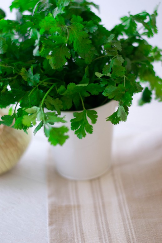 cilantro in white bucket