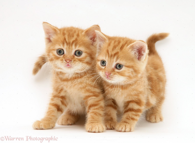 Super Cute Baby Cats Wallpaper Kittens Beauty P3 Kittenbeauty