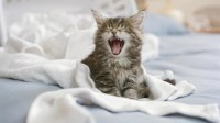How to Stop your Cat From Urinating on the Bed