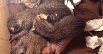 anak kucing dibuang di tong sampah