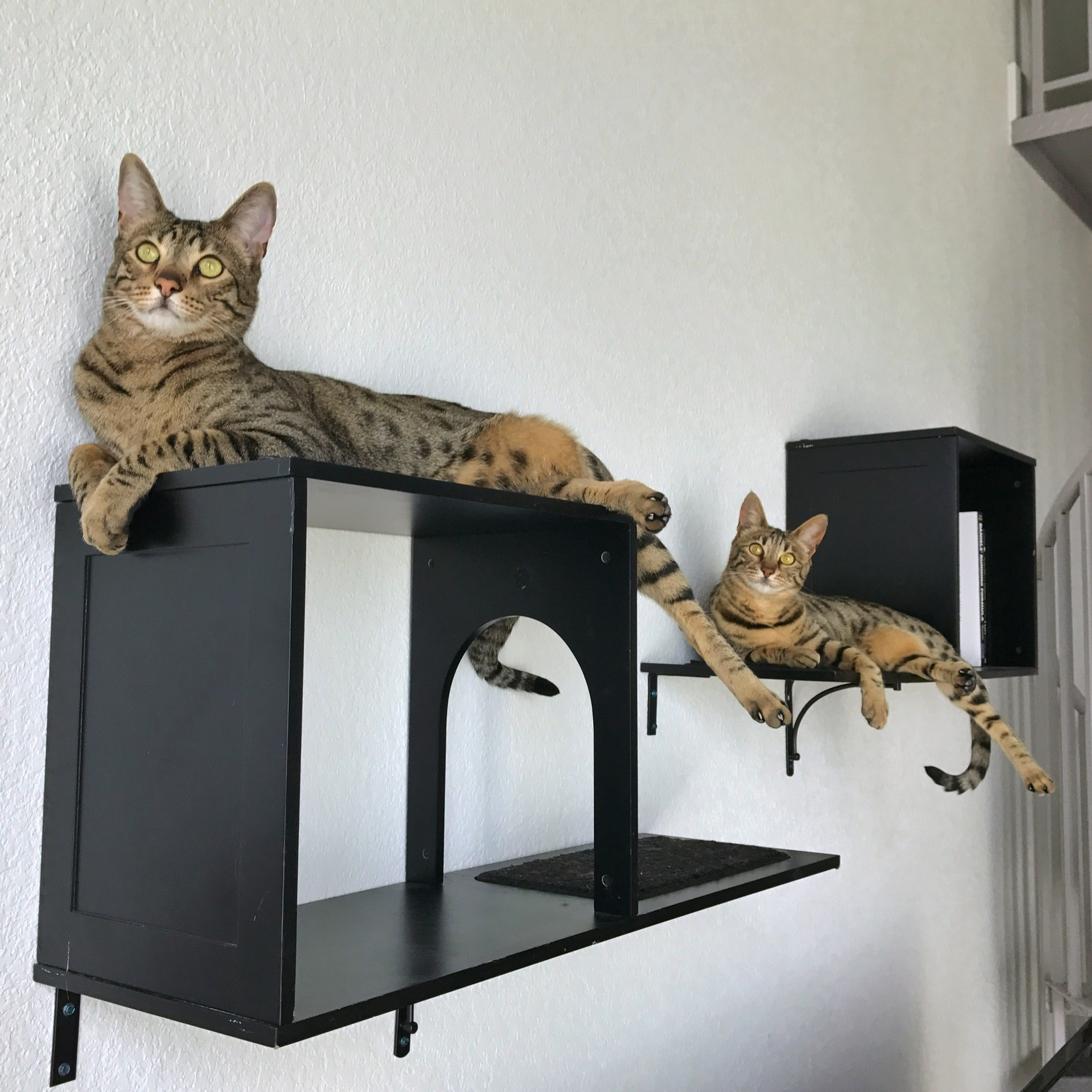 Cat Furniture Wall Sophia Wall Mounted Cat Tree Review Kitty Loaf