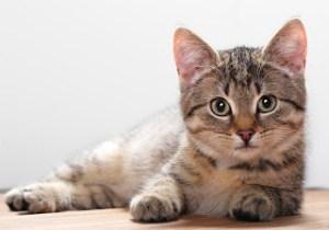 amazing cat species