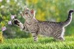 kittytonpost_wallpaper06