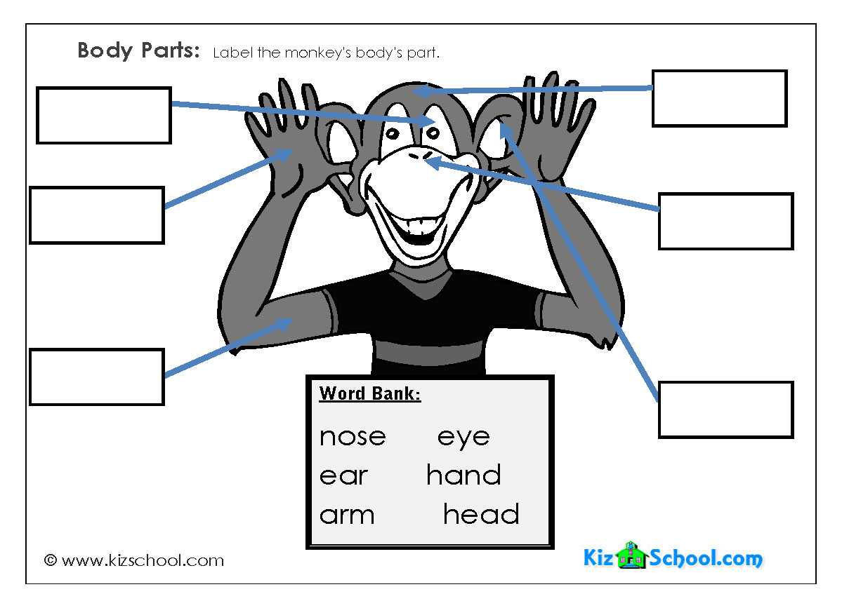 worksheets labeling body parts worksheets for kindergarten body parts k5 worksheetsworksheets. Black Bedroom Furniture Sets. Home Design Ideas