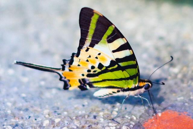 Ett djur från den inhemska faunan