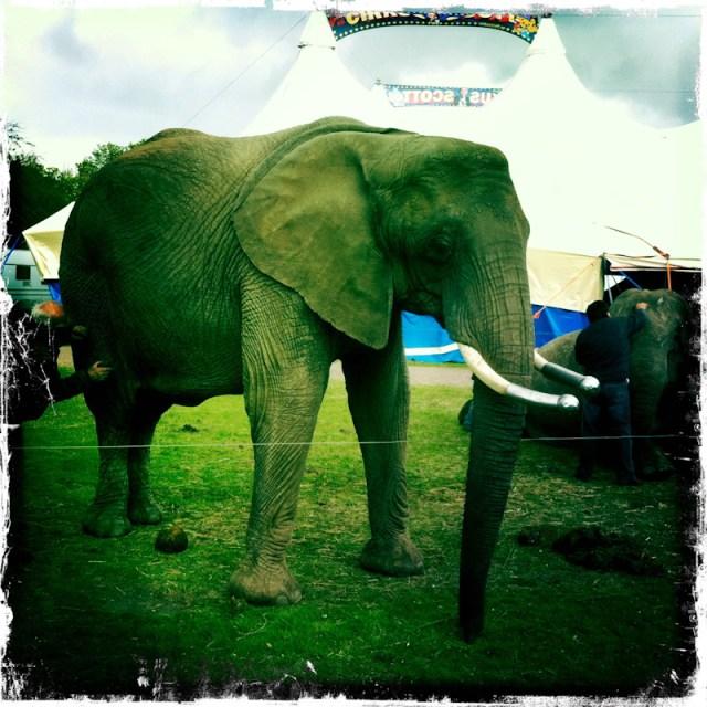 Cirkus i staun!