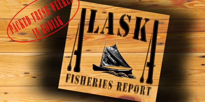 The Alaska Fisheries Report – 'Son of Blob' Found Near Homer
