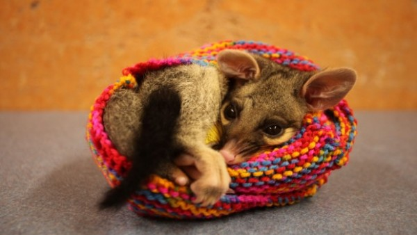 knit marsupial pouches
