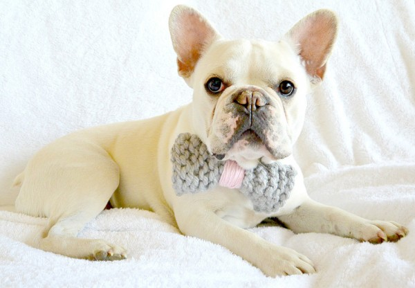 Knit a Bow Tie for a Dog   Knitting
