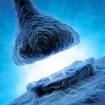 LTP: When Neurons Make a Long-term Commitment