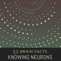 Myth or Fact? The number of neurons in the brain is comparable to the number of stars in our galaxy.