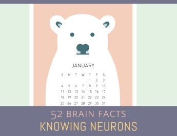 First-month_Cover_Knowing-Neurons
