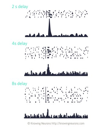 Spiking_3_Knowing-Neurons